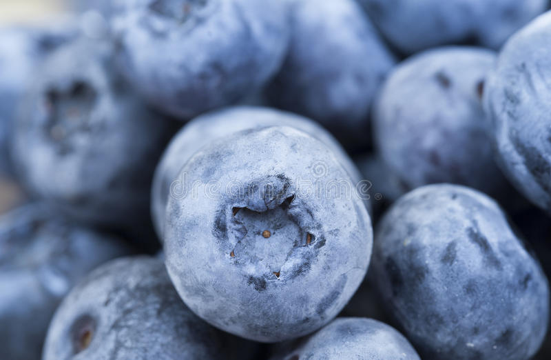 Ripe berries blueberry royalty free stock image