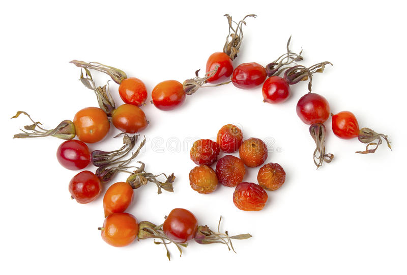 Ripe berries of a dogrose royalty free stock image