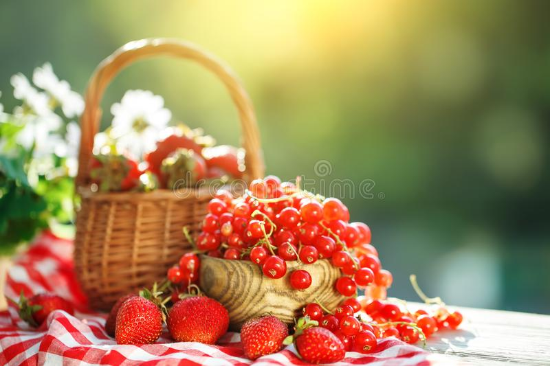 Ripe berries - red currants, strawberries, gooseberries on a wooden table in the summer garden. Harvest. Summer still stock image
