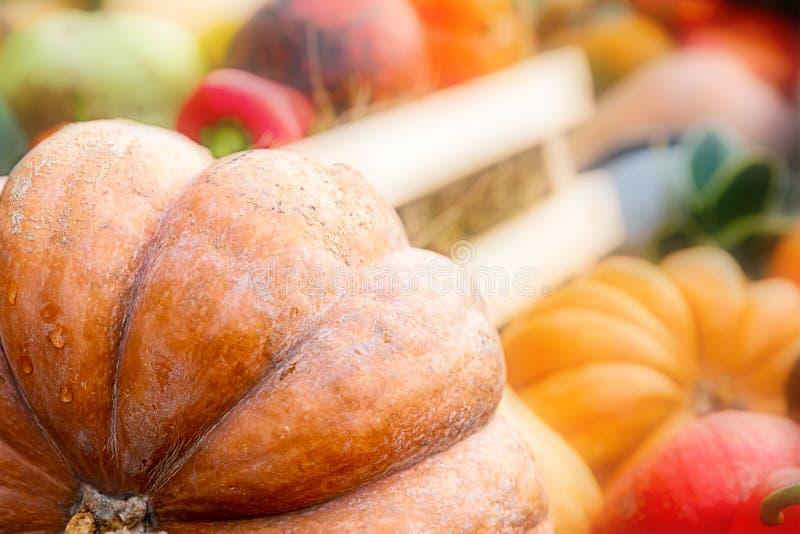 Ripe big vegetable orange pumpkin ribbed soft sunny blur. Set vegetable part of a large pumpkin on the background  autumn stock photos