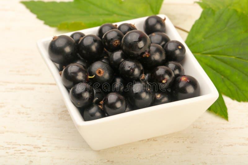 Ripe black currants stock image