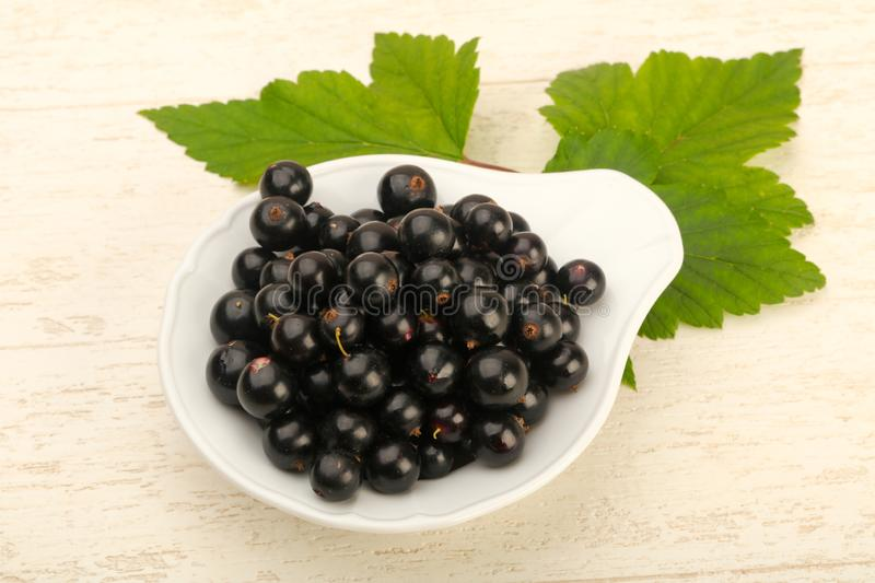 Ripe black currants stock images