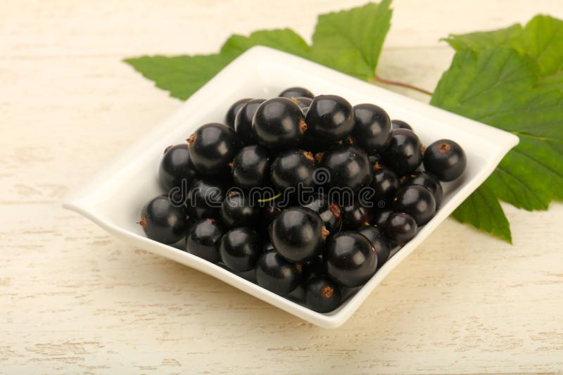 Ripe black currants royalty free stock image
