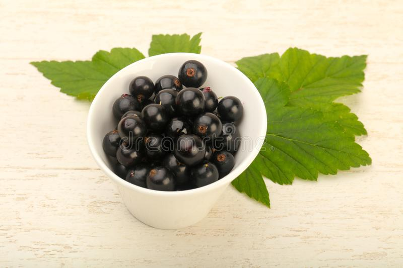 Ripe black currants royalty free stock images