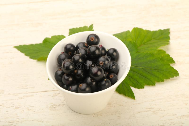 Ripe black currants stock photos