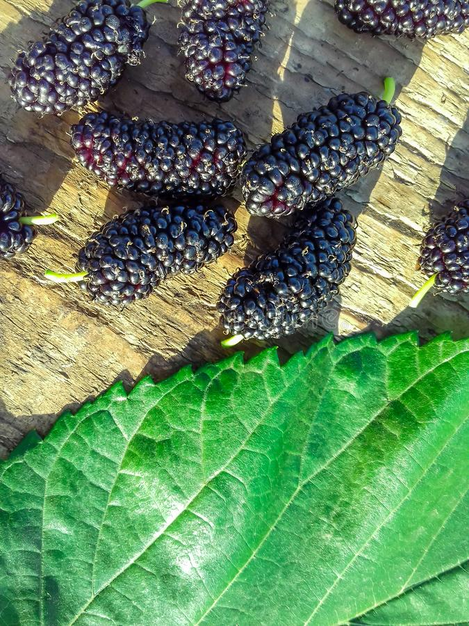 Ripe black mulberries fruit and mulberry leaf on wooden background. Copy space. Berry background. Close-up. Ripe black mulberries fruit and mulberry leaf on royalty free stock images