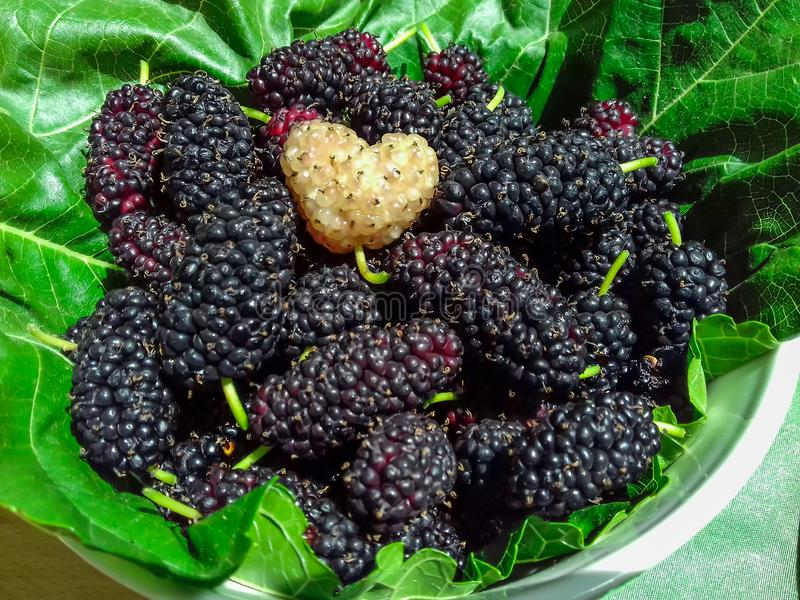 Ripe black mulberries fruit and one white in the shape of a heart on green mulberry leaf. Berry background. Close-up royalty free stock photo