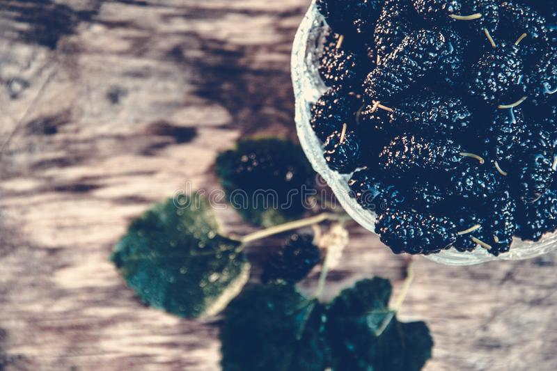 Ripe black mulberry on wooden board. Summer berries. Berry background. Tree and berries royalty free stock image