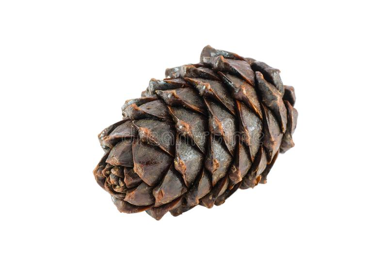 Ripe boiled cedar cone on a white background royalty free stock photo