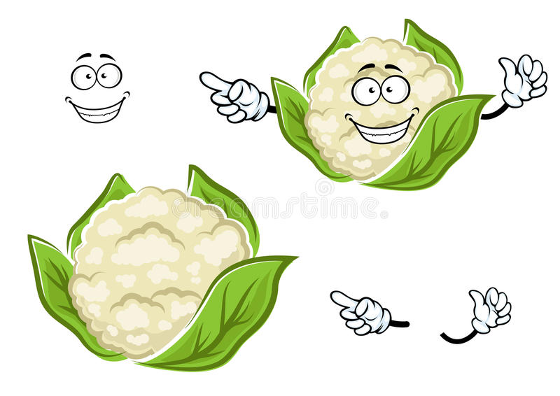 Ripe cartoon cauliflower vegetable with leaves. Happy ripe cauliflower vegetable cartoon character with white head of juicy cabbage, wrapped with green leaves royalty free illustration
