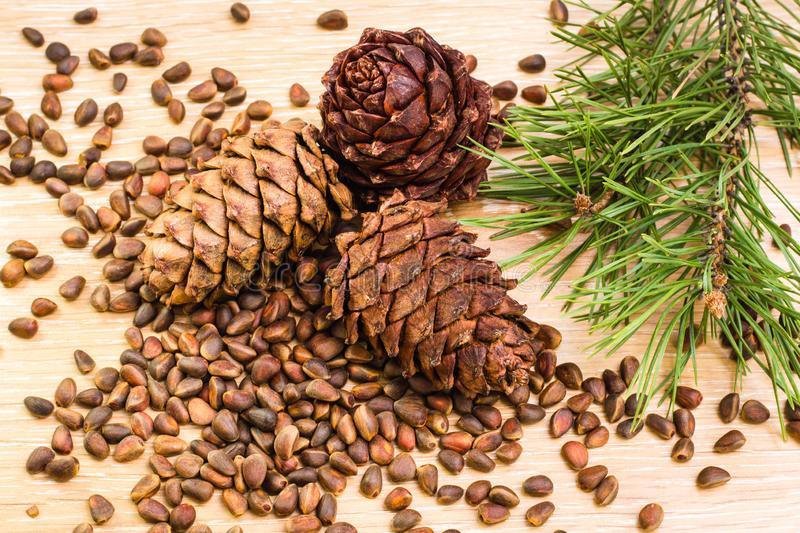 Ripe cedar cones, pine nuts and pine branches royalty free stock image