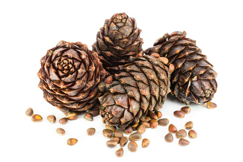 Ripe cedar cones and pine nuts on a white background stock photo