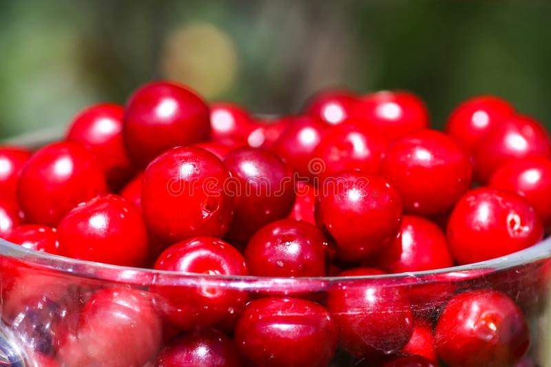Ripe cherries close up. Fresh red cherry fruits in summer garden in the countryside stock photo