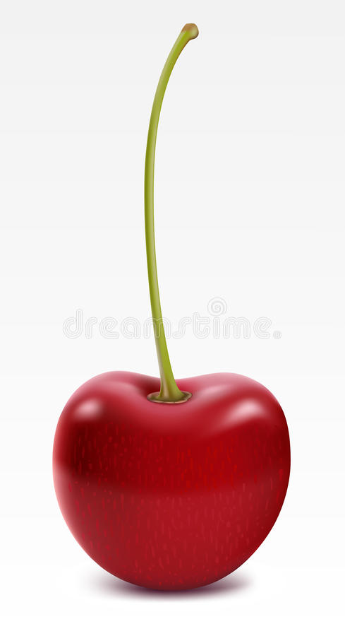 Download Ripe Cherry stock vector. Image of ripe, close, antioxidant - 17356402
