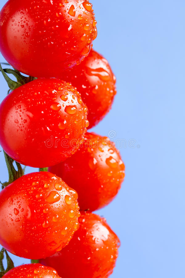 Ripe cherry vine tomatoes. On a blue background royalty free stock photo