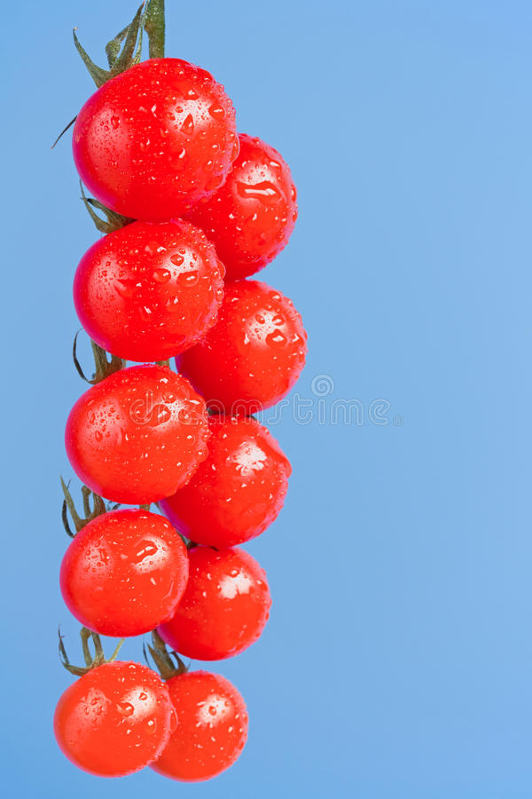 Ripe cherry vine tomatoes. On blue background stock photos