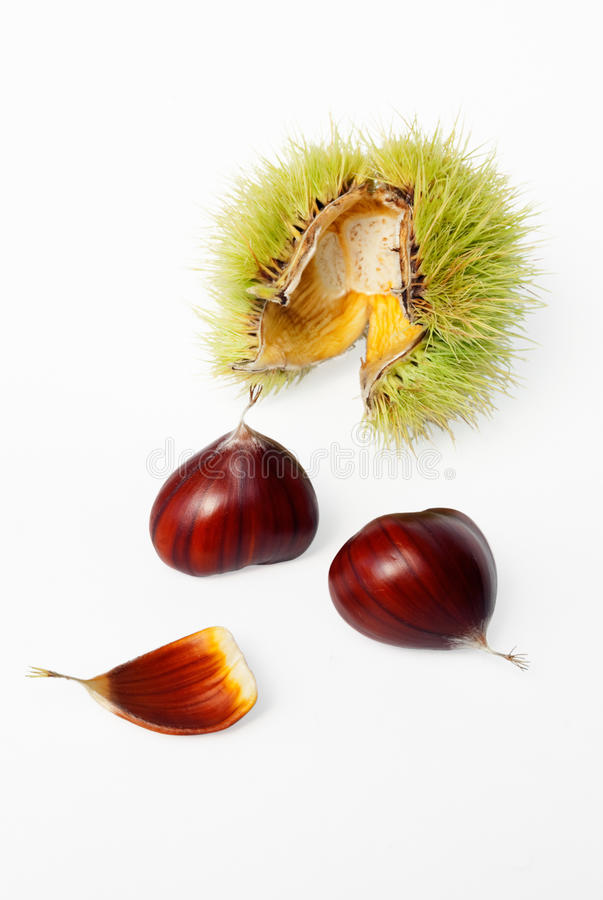 Ripe chestnuts and burr stock photography