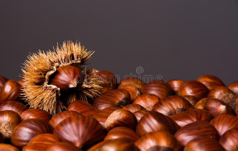 Ripe chestnuts close up. Raw Chestnuts for Christmas. Fresh sweet chestnut. Food background. Copy space stock images