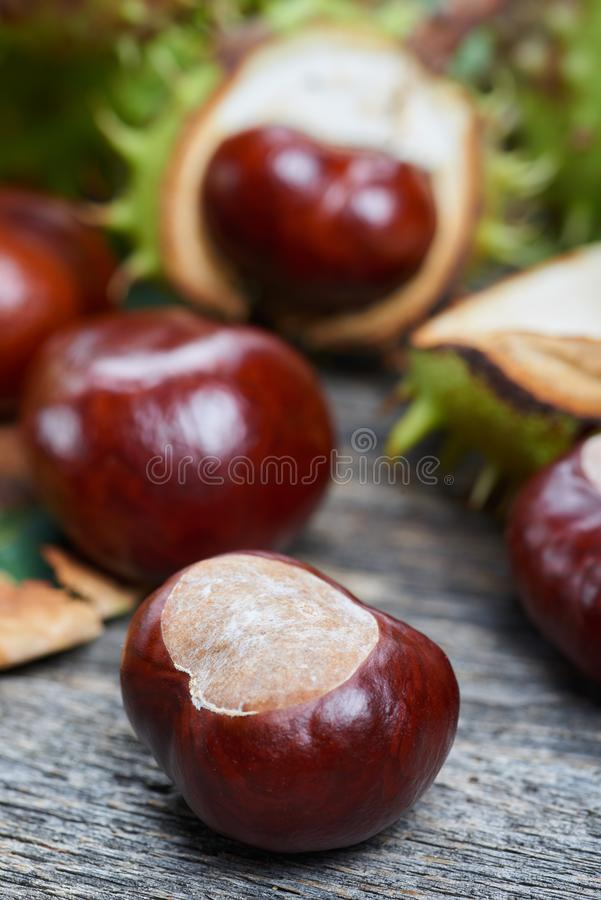 Ripe chestnuts on the wooden table royalty free stock images