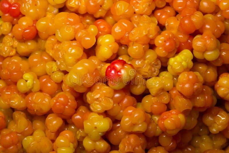 Ripe cloudberrys stock photo