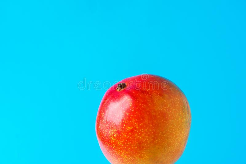 Ripe colorful juicy red and yellow mango on light blue background. Creative food poster. Bright sunlight. Tropical exotic fruits royalty free stock photography