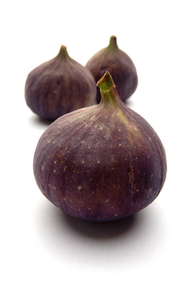 Ripe common figs stock image