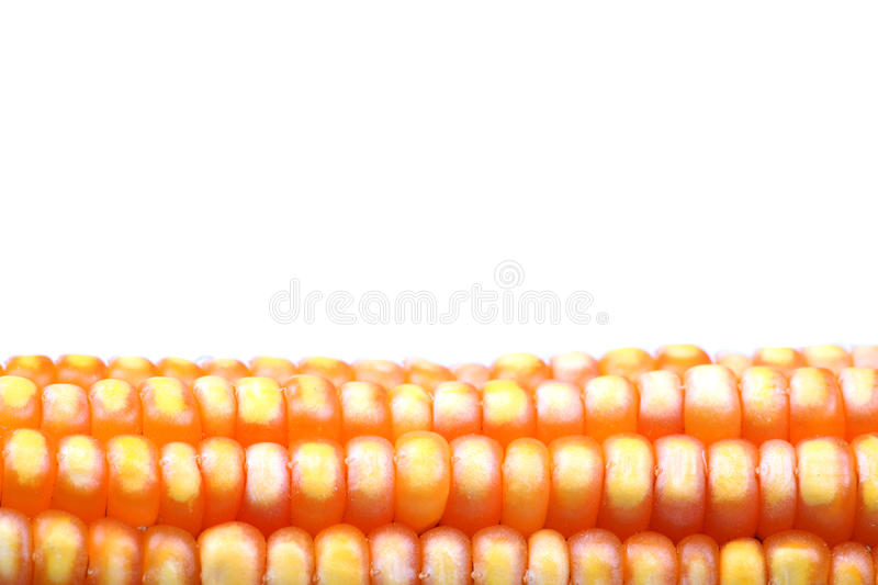 Download Ripe corn stock photo. Image of agriculture, corn, clear - 21546148