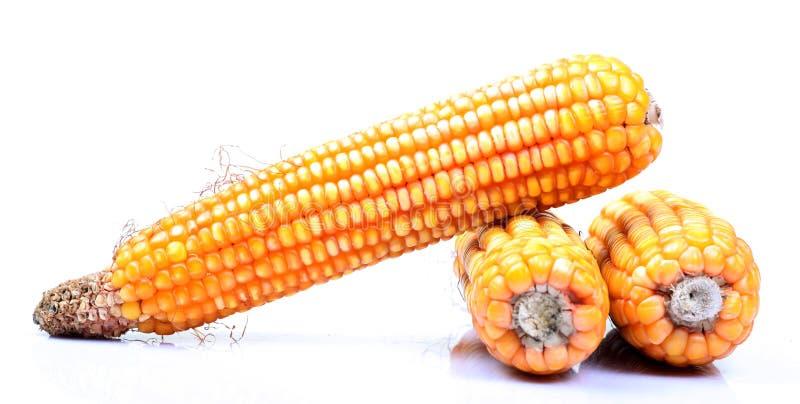 Download Ripe Corn Royalty Free Stock Photo - Image: 21546185