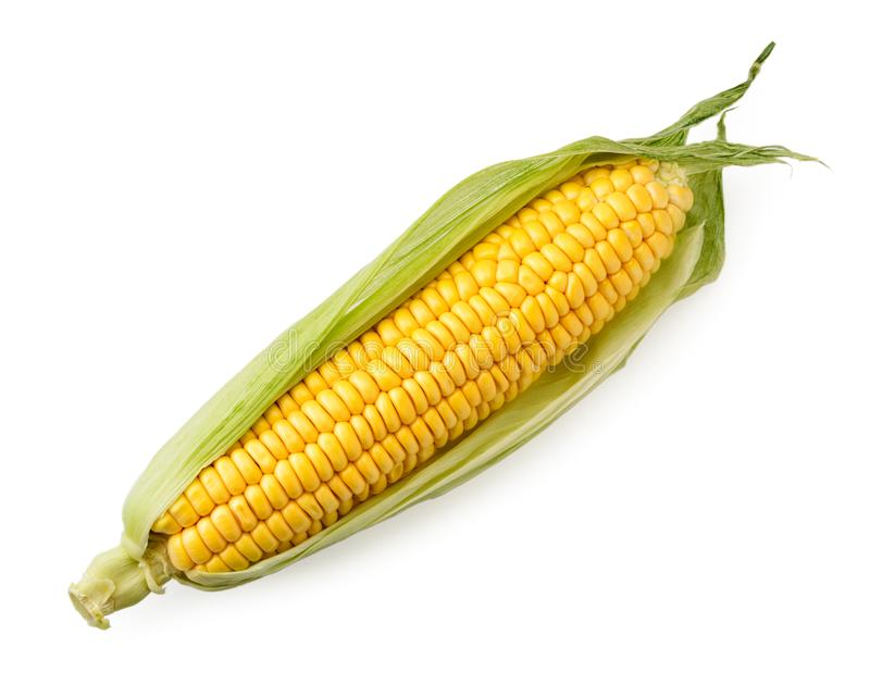 Ripe corn cob in leaves on a white, isolated. The view of the top royalty free stock photo
