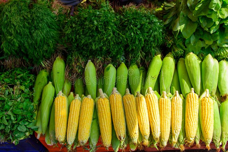 Ripe corn in drops of water and a variety of greens close-up. Local farmer vegetable market in Asia. Counter with corncobs stock photos