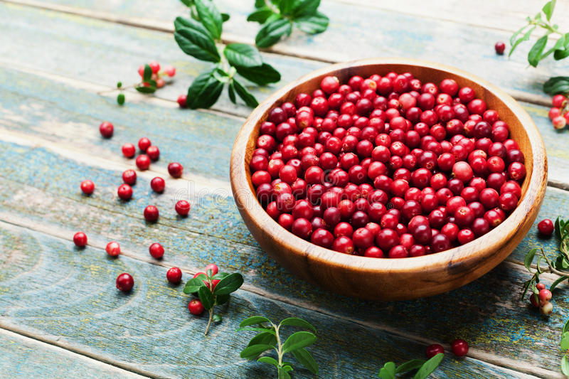 Ripe cowberry lingonberry, partridgeberry, foxberry in wooden bowl on rustic vintage background. Ripe cowberry lingonberry, partridgeberry, foxberry in wooden royalty free stock images