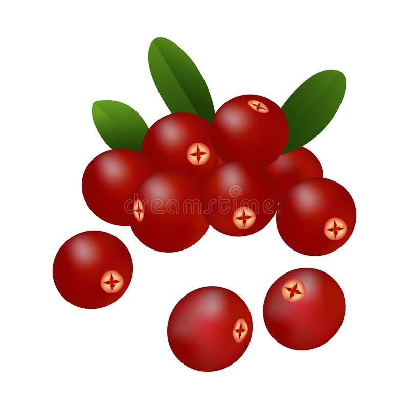 Ripe cranberries with leaves on white background. stock illustration