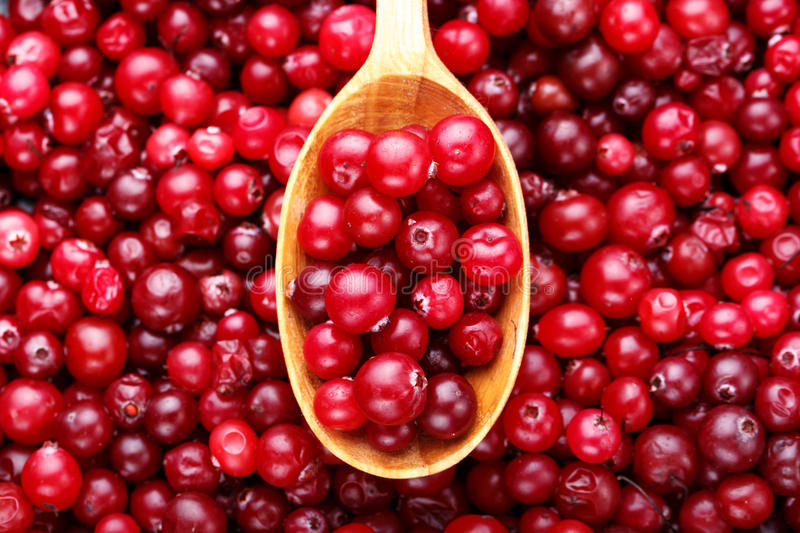 Ripe cranberries in a spoon stock image