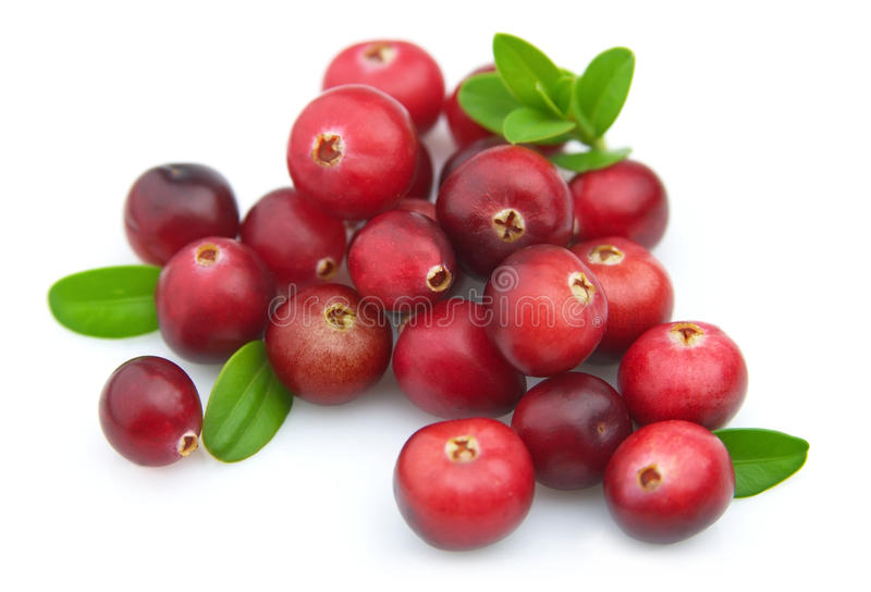 Ripe cranberry stock images