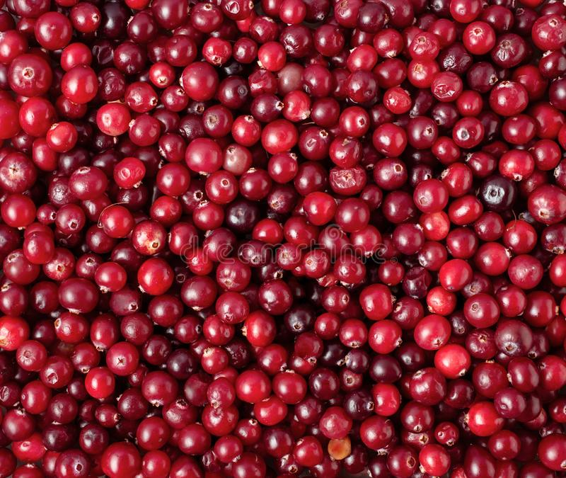 Ripe cranberry background royalty free stock photo