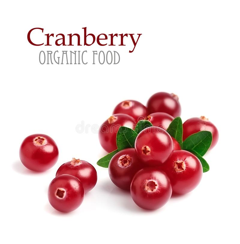 Ripe cranberry with leaves. royalty free stock photo