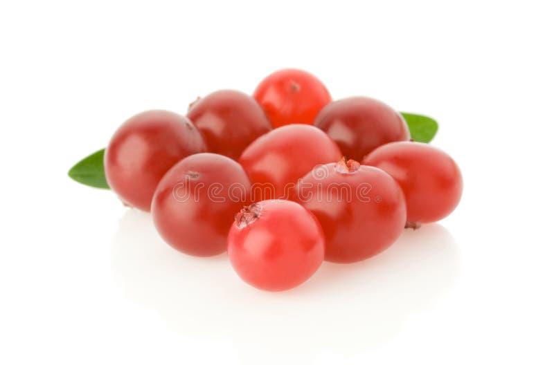 Ripe cranberry on white stock photos