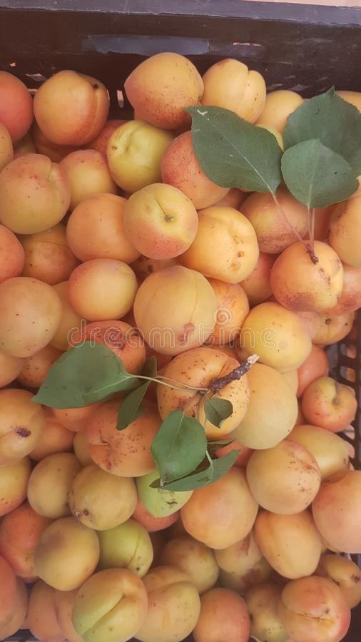 Ripe delicious apricots in the harvest box stock images