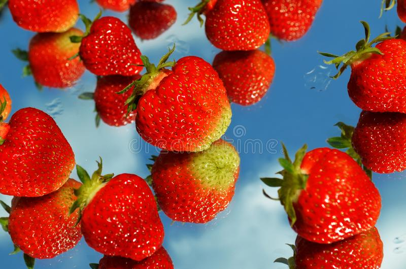 Ripe delicious red strawberries are laid out on the mirror in random order royalty free stock images