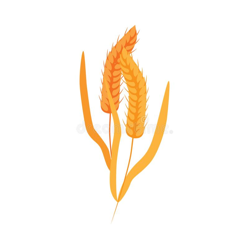 Ripe dry wheat ears with grains on stalk in flat style. Ripe dry wheat ears with grains on stalk in flat style - vector illustration of yellow whole cereal stock illustration