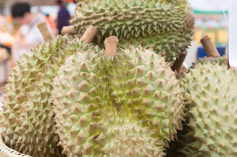 Ripe durians on sale in pile in supermarket. Delicious durians, king fruit, sweet durians, healthy durians royalty free stock image