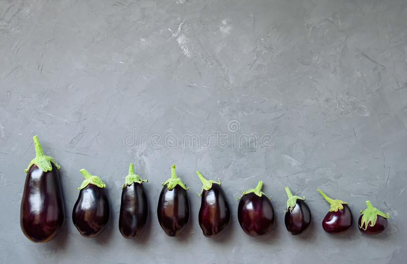 Ripe eggplant lie on a gray concrete background. Top view. royalty free stock image