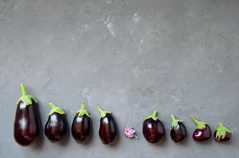 Ripe eggplant lie on a gray concrete background. Top view. royalty free stock images