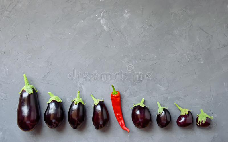 Ripe eggplant and one hot pepper are arranged in a row on a gray background. stock images