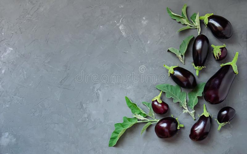 Ripe eggplants of different sizes on a gray concrete background. Top view. royalty free stock photography