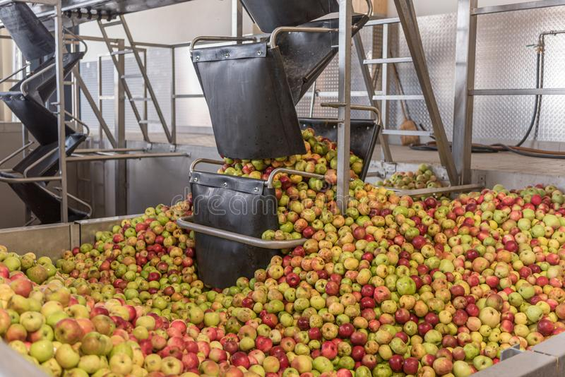 Ripe fall apples in a storage silo, ready to squeeze apple juice. Ripe fall apples in a container, ready to squeeze apple juice stock image