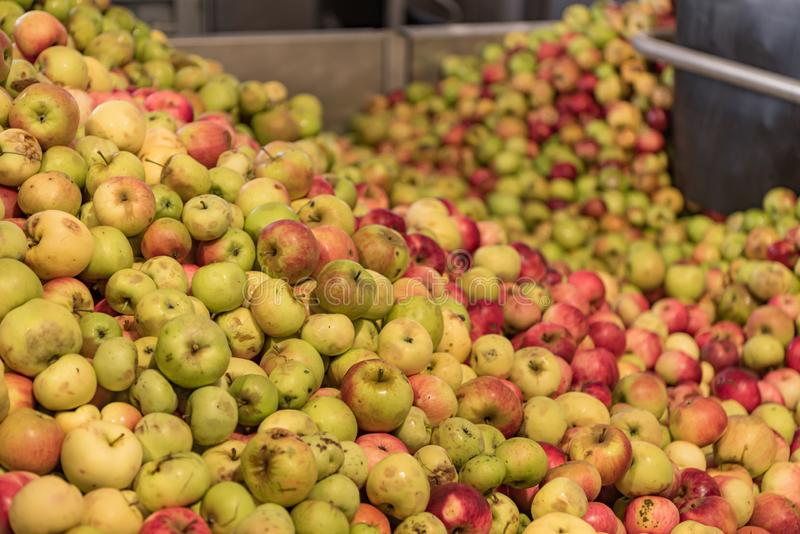 Ripe fall apples in a storage silo, ready to squeeze apple juice. Ripe fall apples in a container, ready to squeeze apple juice stock photography