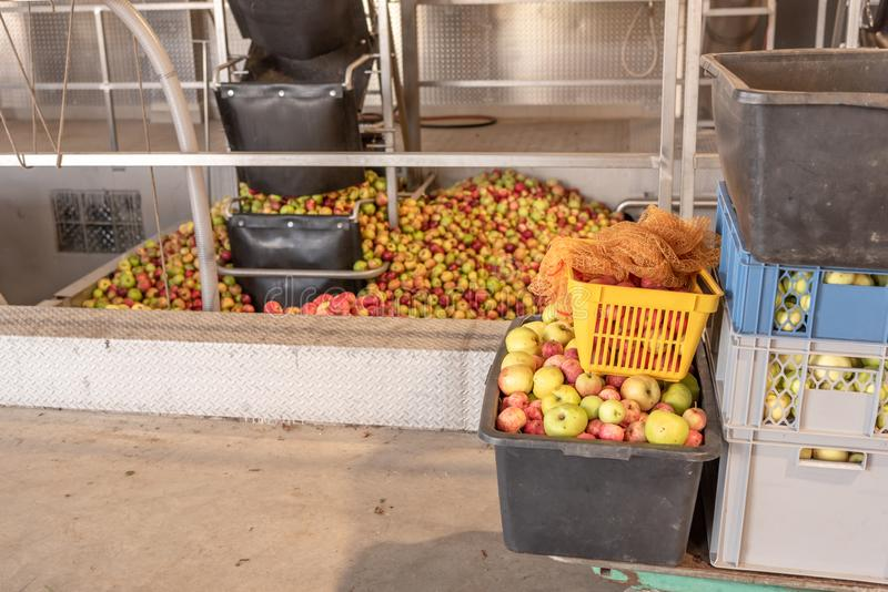 Ripe fall apples in a storage silo, ready to squeeze apple juice. Ripe fall apples in a container, ready to squeeze apple juice royalty free stock photography