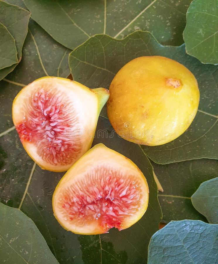 Ripe figs are foamed in fresh leaves of figs. Natural fruits from a tree, healthy food. Vegan, vegetarian, healthy lifestyle, benefits, vitamins, longevity royalty free stock photo