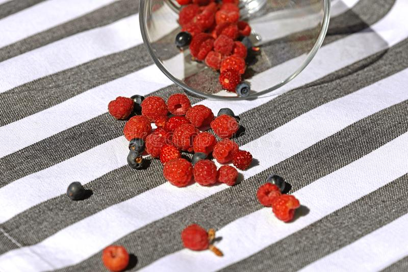 Forest berries on table royalty free stock photography